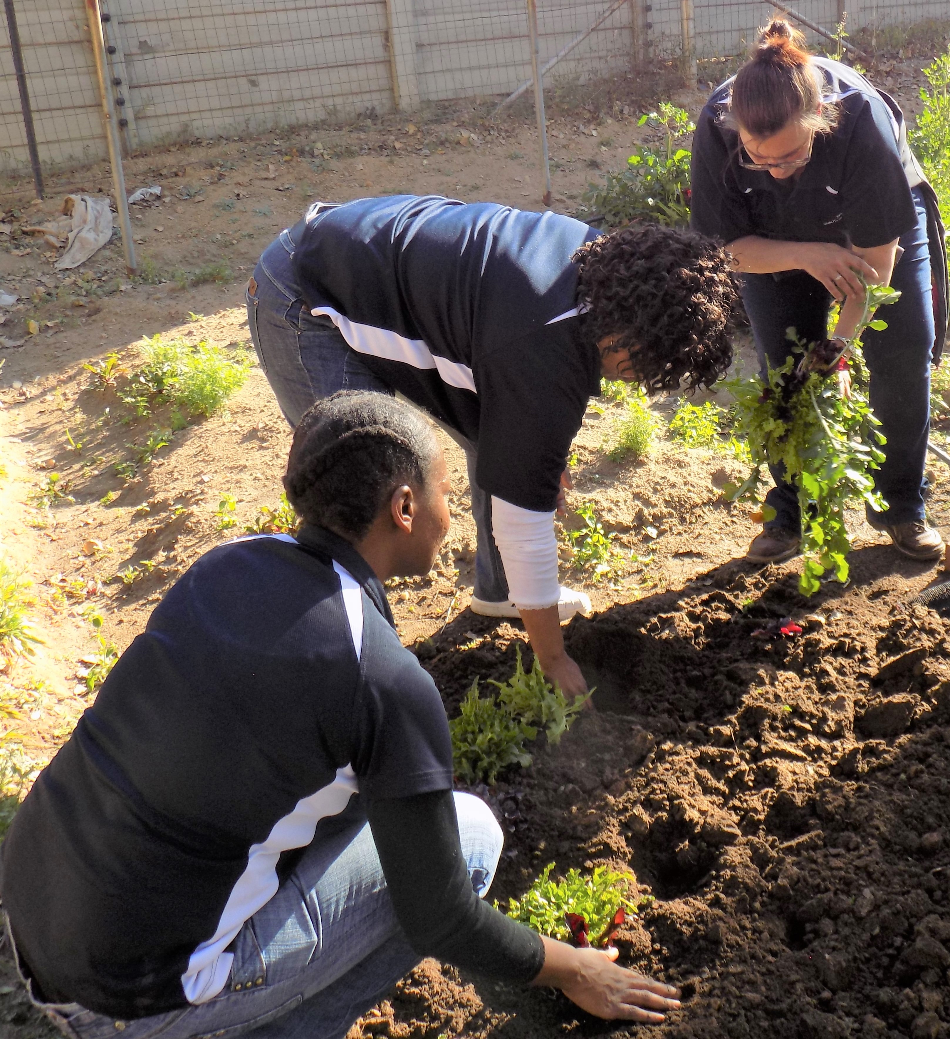3 sodexo employees busy working in a vegetable garden